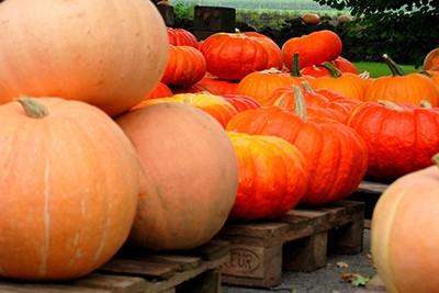 pumpkin-2725299_pixabay